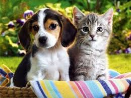 cani e gatti 3